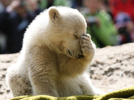 Mr. Duke's Fund Update-polar-bear-jpg